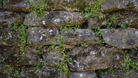 steenmuur met mos wordt behandeld dat stock videobeelden
