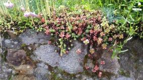 Steenmuur met uiterst kleine bloemen royalty-vrije stock afbeeldingen
