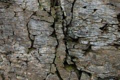 Steenmuur van rots met barsten stock afbeeldingen