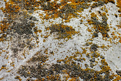 Steenoppervlakte met mos en korstmos Royalty-vrije Stock Foto