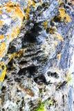 Steenoppervlakte met mos is ontsproten dat royalty-vrije stock afbeeldingen