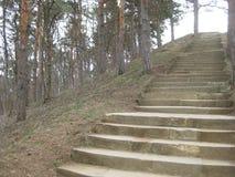 Steenstappen die tot een Pijnboomheuvel leiden in het toevluchtpark Kislovodsk stock foto