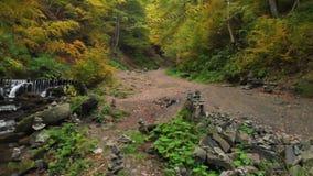 Steensteenhopen Bergrivier in Forest National Park ukraine stock video