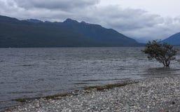 Steenstrand met het eenzame boom groeien in een meer met montains op de achtergrond in Fiordland in Nieuw Zeeland stock afbeelding