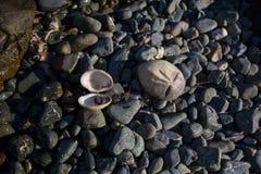 Steenstrand met op zee shell Stock Afbeeldingen