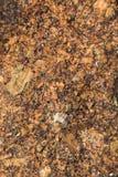 Steentextuur op het strand voor achtergrond Stock Afbeeldingen