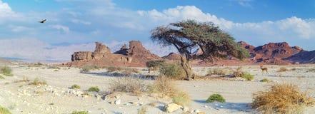 Steenvormingen in geologische formatie van Juraperiode in Timna-park Stock Afbeelding