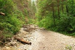 Steenweg in droog rivierbed van rivier Suchà ¡ Belà ¡ in Slowaaks Paradijs stock foto's