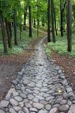 Steenweg in een dicht groen bos royalty-vrije stock fotografie