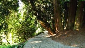 Steenweg in het park Royalty-vrije Stock Afbeelding