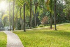 Steenweg in het stadspark Royalty-vrije Stock Afbeelding