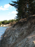 Steep bank. Steep sandy  lakeshore, alongside pine-wood, quiet canicular day Stock Images