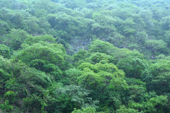 Steep Central American jungle landscape Royalty Free Stock Image