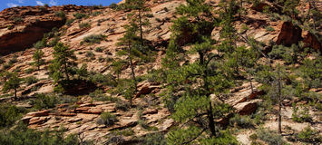 Steep  cliff and  conifers Royalty Free Stock Image