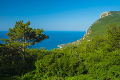 The steep coast of the Black Sea with a lonely pine Royalty Free Stock Images