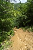 Steep descent from a wooded hill. In a summer sunny day royalty free stock images