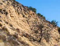 Steep dirt hillside with ancient tree in the Santa Monica Mountains of California. Steep golden dirt hillside with ancient trees in the Santa Monica Mountains at Stock Photography