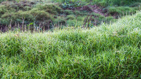Steep grassy knoll Stock Images