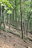 Steep hill in the woods Royalty Free Stock Photo