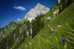 Steep mountain meadow Stock Photos
