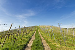 Steep path upwards through vineyard landscape in early summer Stock Photo