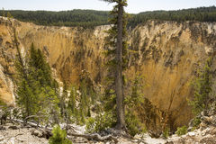 Steep ravine of Grand Canyon of the Yellowstone, Wyoming. Royalty Free Stock Photography