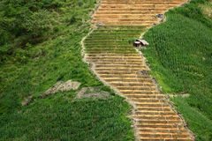 On the steep rice terraces, is a lonely hut Stock Photo