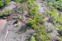 Steep rock with trees. A steep rock among the trees royalty free stock images