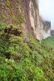 The steep rock wall of Monte Roraima stock images