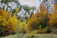 Steep rock walls and autumn colors in Zarnestiului Gorge. Steep rock walls in Zarnestiului Gorge, a spectacular canyon leading to The Curmătura Cabin, Zarnesti Stock Image