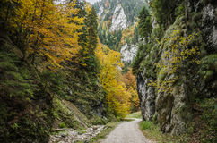 Steep rock walls and autumn colors in Zarnestiului Gorge Stock Images