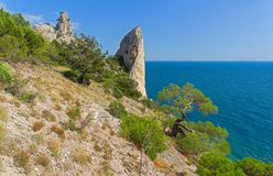 The steep rocky coast of the Black Sea, covered with relict pine. S and juniper trees. Sunny summer day. Crimea, Novyy Svet, -Oba Royalty Free Stock Photo