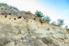Steep sand wall with nests of Bank swallows, Riparia riparia. Steep sand bank with different types of soil layers and nest Burrows of Bank swallows Stock Photography
