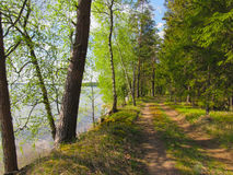 The steep shore of the lake. In a pine forest Stock Photo