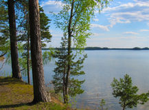 The steep shore of the lake. In a pine forest Royalty Free Stock Image