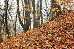 Steep slope in the autumn forest Stock Images