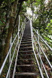 Steep stairs in the rainforest Royalty Free Stock Photo