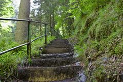 A steep stairs way in the ravennaschlucht royalty free stock photos