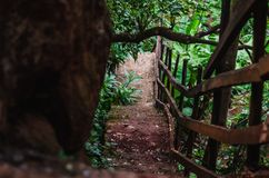 Steep steps down a path in a forest next to a big rock stock image
