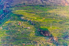 Steep Terraced Hillside in Southern Italy royalty free stock photo
