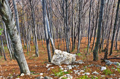 Steep terrain in a dense forest with a few rocks at Homolje mountains Stock Photo