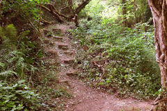 Steep trail through the woods in Somerset, England Royalty Free Stock Photography