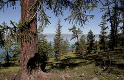 The steep wooded shore of the lake Hovsgol. Relict larch on the slope of a coastal hill in the background of the bowl of the lake and the far shore on the Stock Photos