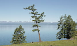 The steep wooded shore of the lake Hovsgol. Relict larch on the slope of a coastal hill in the background of the bowl of the lake and the far shore on the Royalty Free Stock Photography