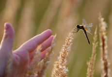 Steepe insect Stock Images