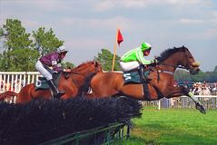 Steeplechase. Horses in midair as they race in the steeplechase Royalty Free Stock Photos