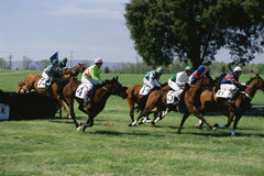 Steeplechase Race Stock Images
