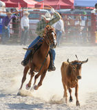 Steer Roping. At a Rodeo Royalty Free Stock Photography