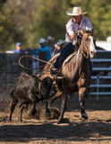 Rope that Steer. Steer roping cowboy at the Scott Valley Pleasure Park Rodeo in Etna, California stock photo