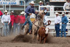 Steer Roping - PRCA Sisters, Oregon Rodeo 2011 Stock Images